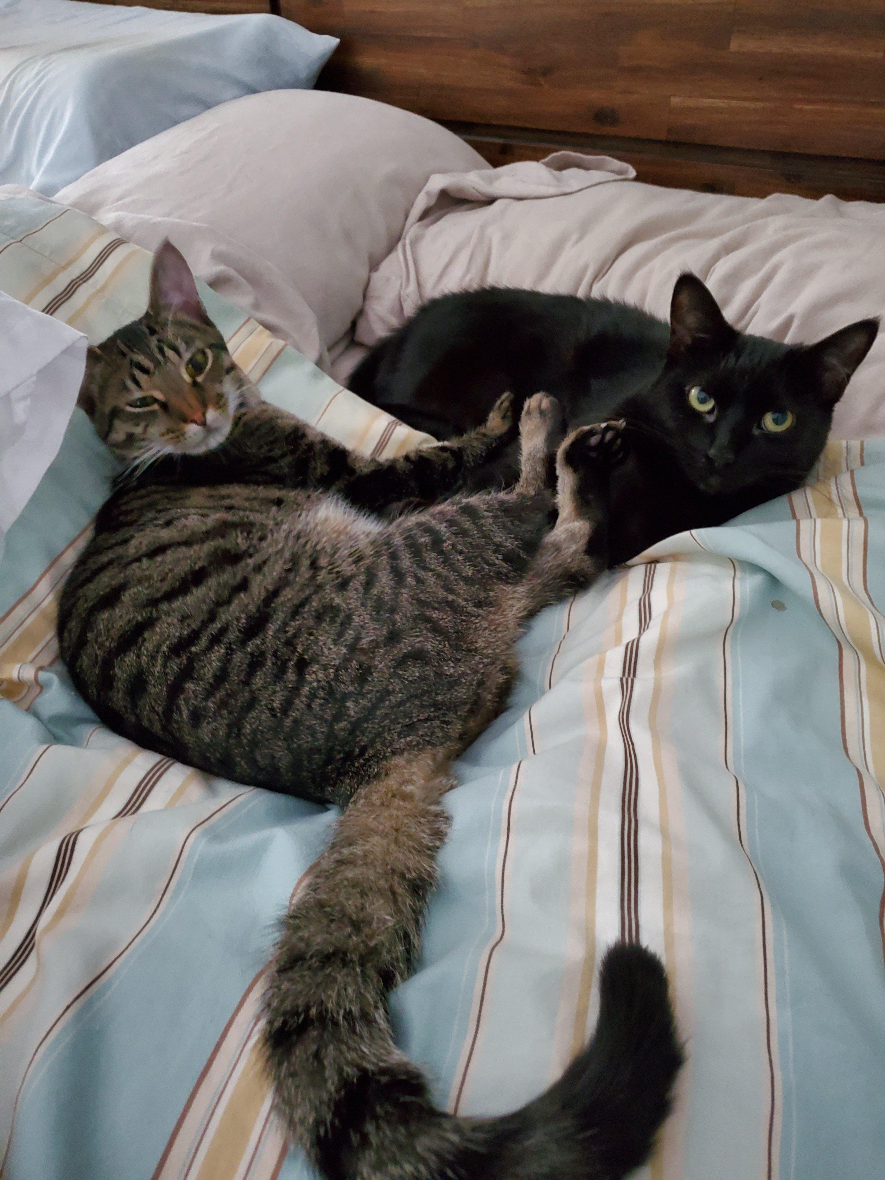 Kitty nap.jpg