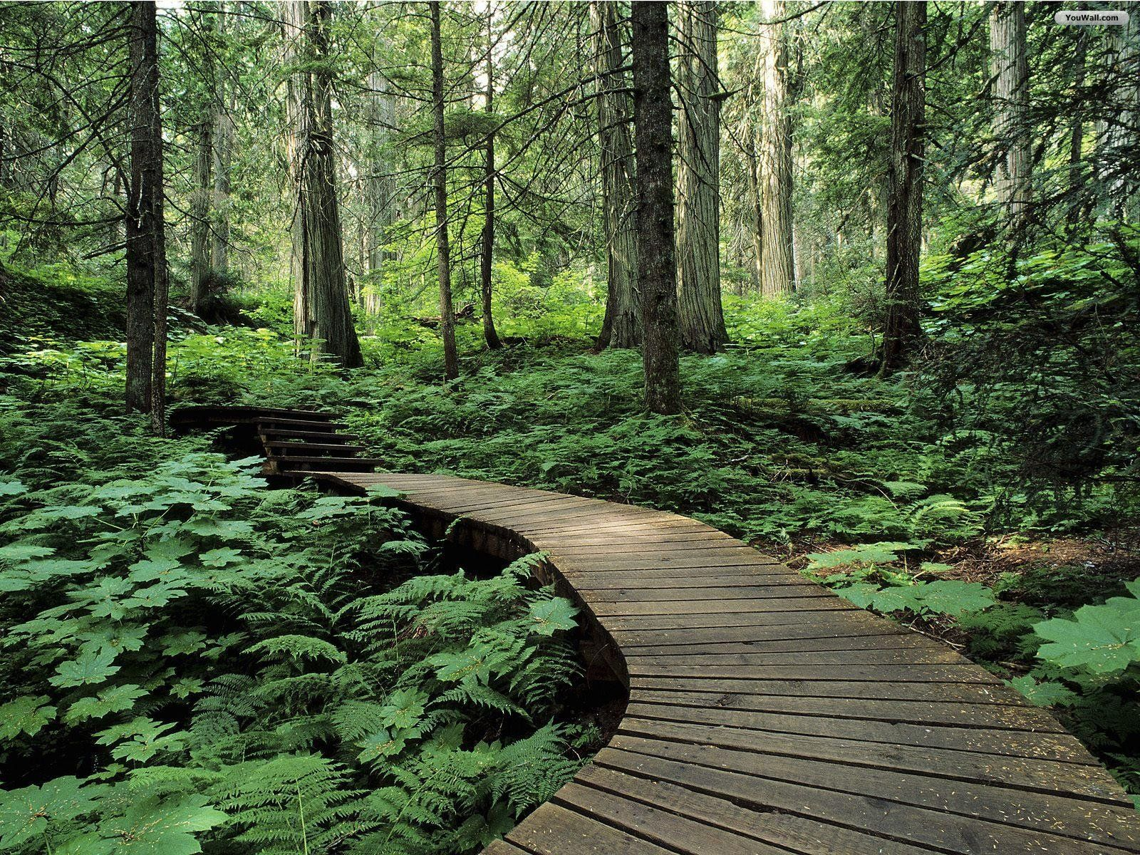 rainforest-trail1.jpg