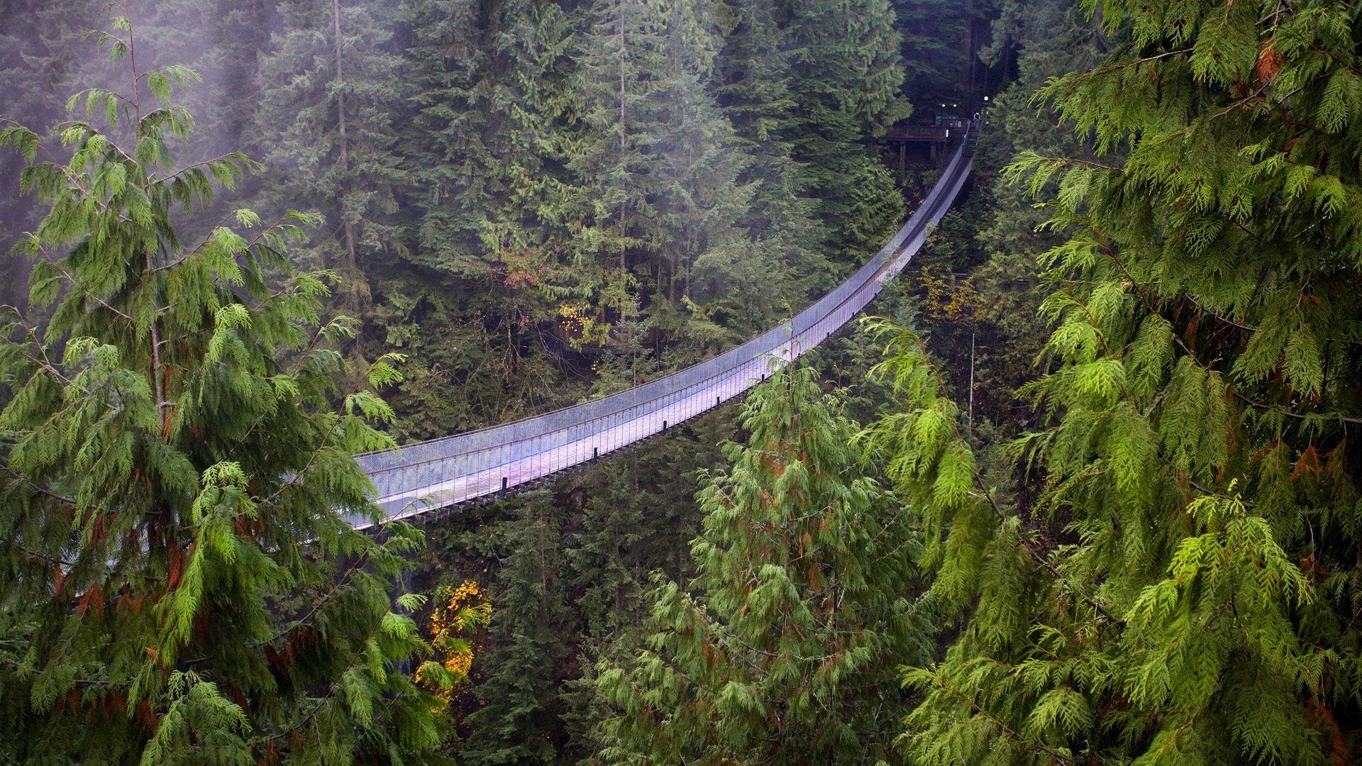 suspension-bridge1.jpg