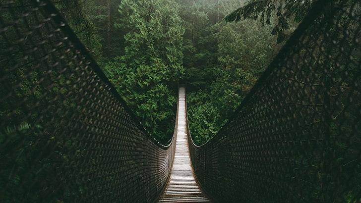 suspension-bridge2.jpg