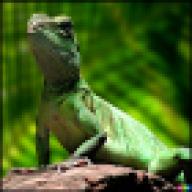 Cecil Lizard