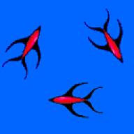 Ferocitus