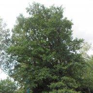 TreeSpawned